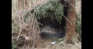 Survival-Bushcraft-Shelter-1